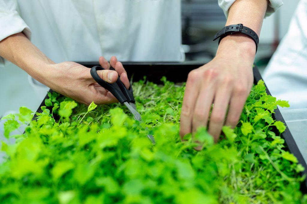 Portable planter box for herbs